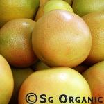 Tart tangy organic grapefruit
