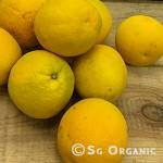 Navel-oranges1