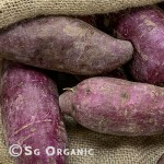 Potato-kumera-re