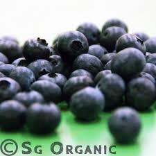 blueberry-sgorganic