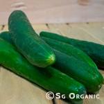 cucumber_english_sgo