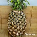 pineapple_sgo