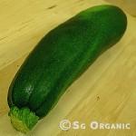 zucchini_sgo