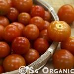 SG Organic Cherry Tomatoes