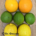 citrus rainbow_sgo copy