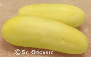 cucumber-apple copy