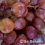 redgrapes_sgo