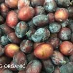 sugar-plum