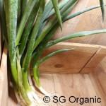 SG Organic_Shallots