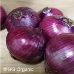 SG Organic_Onion Red