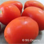 SG Organic_Tomato Roma_Prod Featured